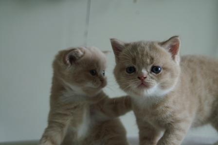 2cats060920.jpg