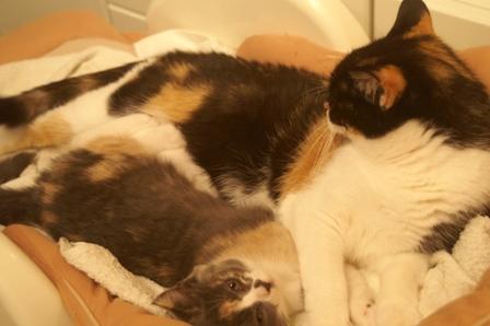 2cats071112.jpg