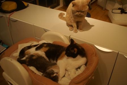 3cats071112.jpg