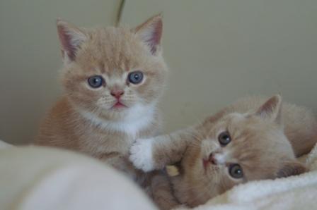 cats060928.jpg