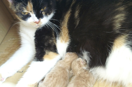 kittens060825-2.jpg