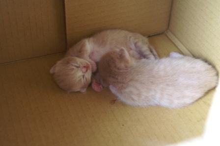 kittens060827-1.jpg