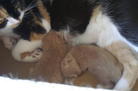 kittens060827-2.jpg