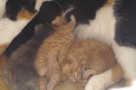 kittens070413.jpg