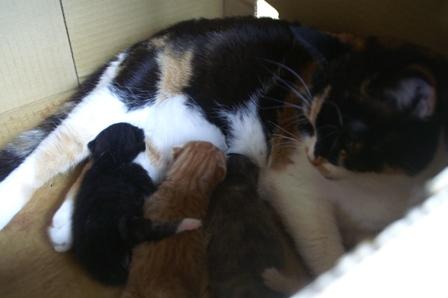 kittens070417-2.jpg