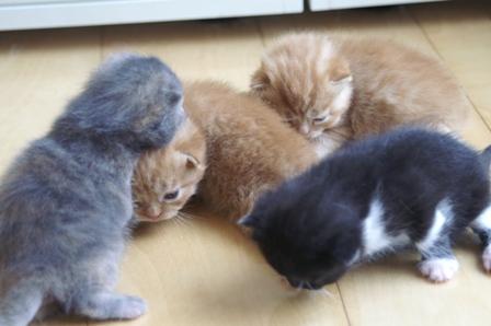 kittens070424-1.jpg