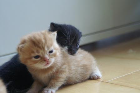 kittens070424-2.jpg