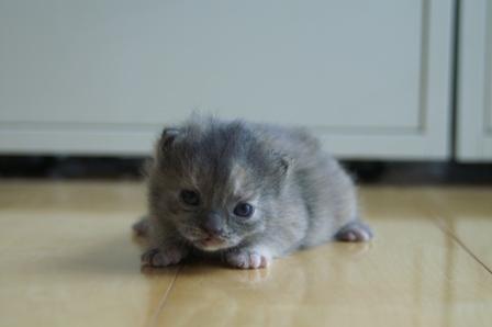 kittens070424-3.jpg