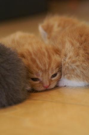 kittens080413-2.jpg