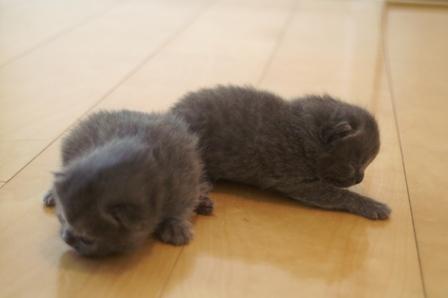 kittens080413-3.jpg