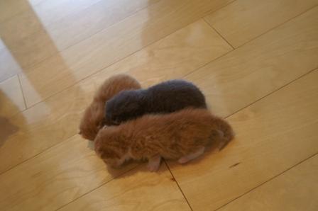 kittens080413-5.jpg