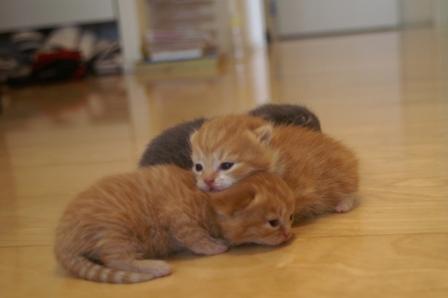 kittens080413-6.jpg