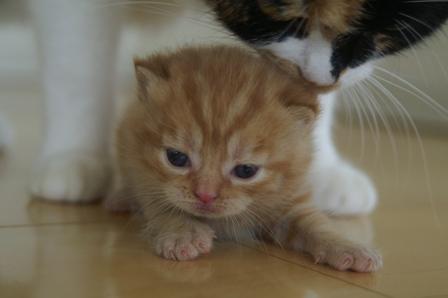 kittens080417-1.jpg