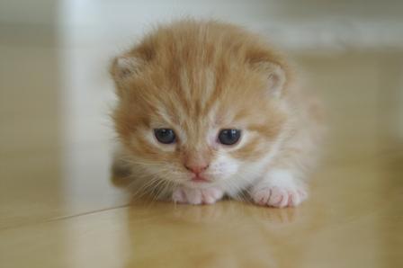 kittens080417-2.jpg