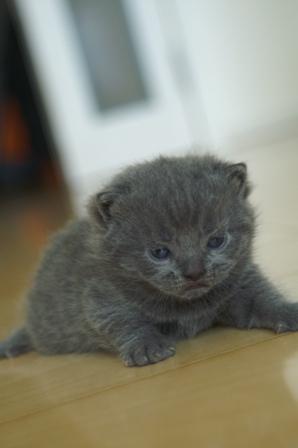 kittens080417-3.jpg