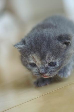 kittens080417-4.jpg