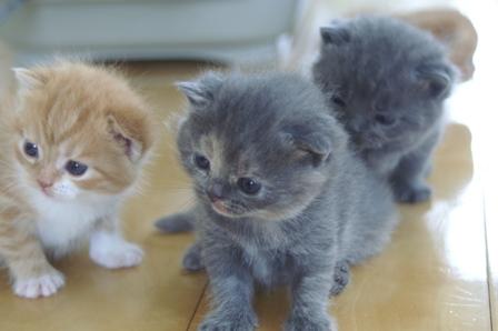 kittens080420-1.jpg
