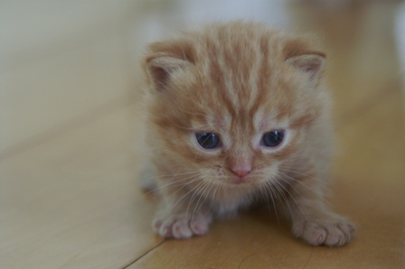 kittens080420-2.jpg