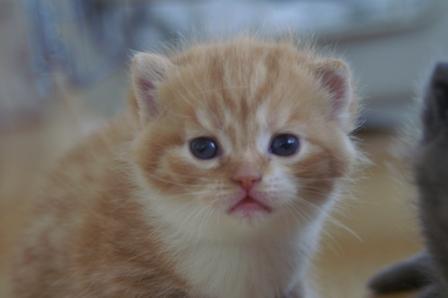 kittens080420-3.jpg