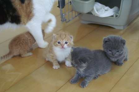 kittens080420-5.jpg