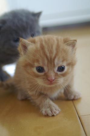 kittens080420-6.jpg