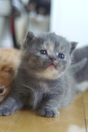kittens080420-7.jpg