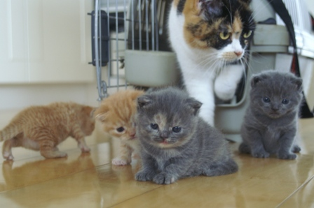 kittens080420-8.jpg