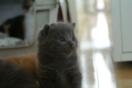 kittens080420-9.jpg