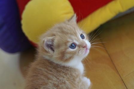 kittens080502-1.jpg