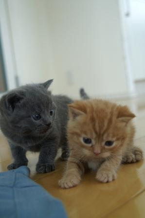 kittens080502-2.jpg