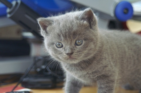 kittens080502-blue-2.jpg