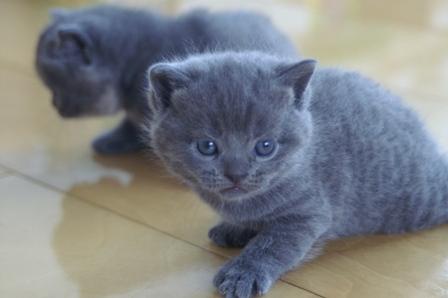 kittens080502-blue.jpg