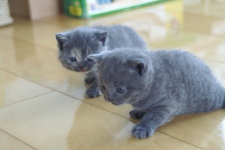kittens080502-blues.jpg