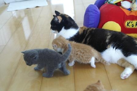 kittens080502-family.jpg