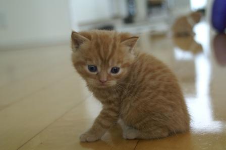 kittens080502-tabby.jpg