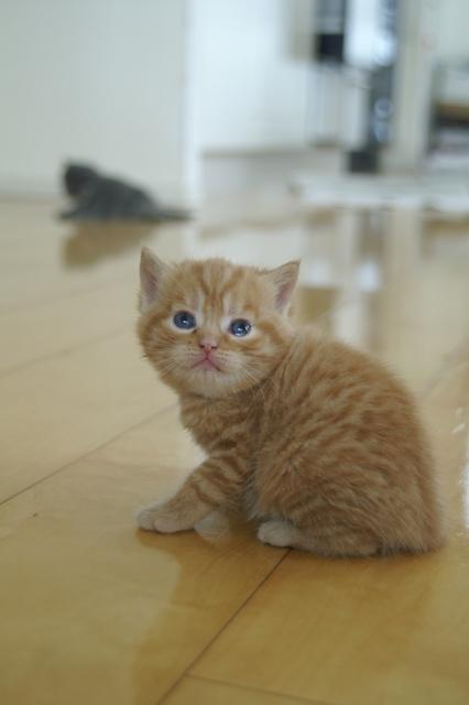 kittens080502-tabby2.jpg