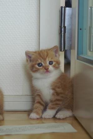kittens080502-tw-1.jpg