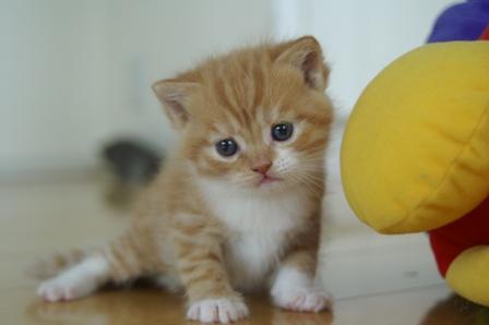 kittens080502-tw-3.jpg