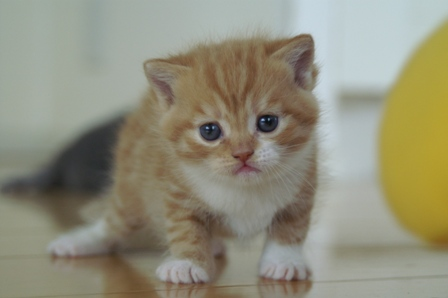 kittens080502-tw2.jpg