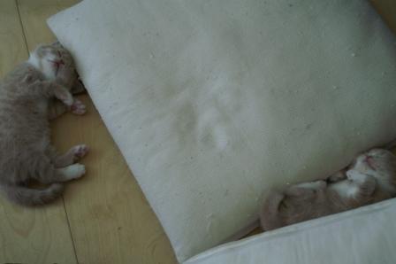 sleeping060920.jpg